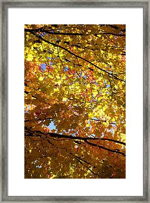 Framed Print featuring the photograph Layers Of Autumn by Corinne Rhode