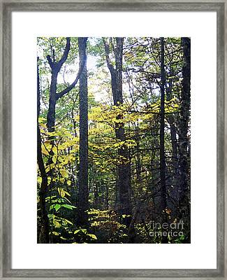 Layers Of Fall Framed Print