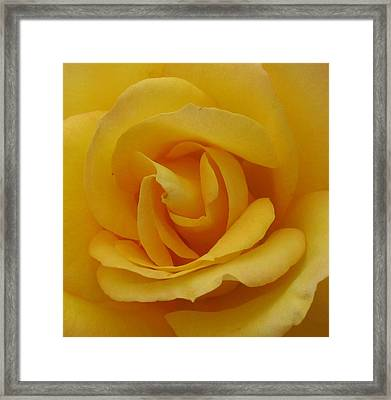 Layers Of Petals Framed Print by Kathy Roncarati