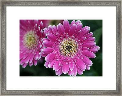 Layers Of Spring Framed Print by Pamela Critchlow