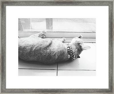 Laying Cat Cleaning Herself On Ground Black And White Color Framed Print by Siri