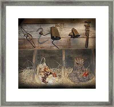 Laying Hens Framed Print by Kim Henderson