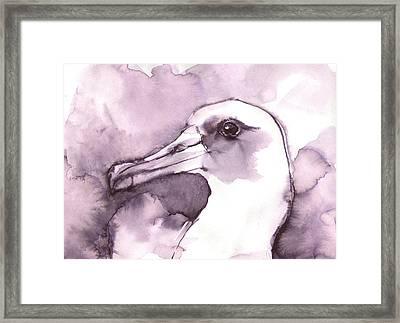Laysan Albatross Framed Print
