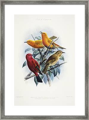 Laysan Honeycreeper Framed Print by Reggie David - Printscapes