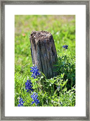 Lazin' In The Sun Framed Print by Joan Bertucci