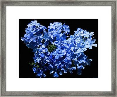 Lazy Blue Dazes Framed Print by Evelyn Patrick