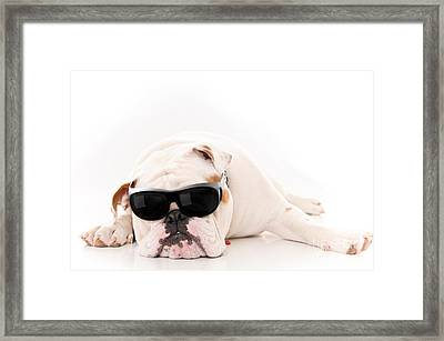 Lazy But Cool Dog Framed Print by Jt PhotoDesign