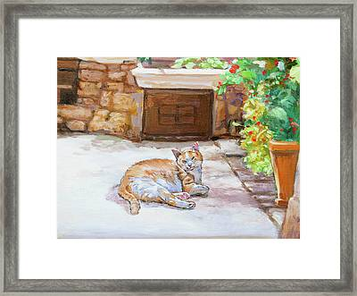 Lazy Cat Framed Print by Dominique Amendola