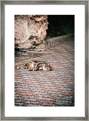 Lazy Cat    Framed Print by Silvia Ganora