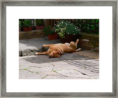 Lazy Day Framed Print by Angela Wright