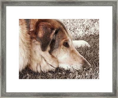 Lazy Day Framed Print by JAMART Photography