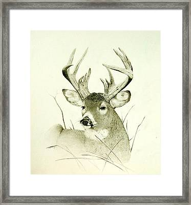 Lazy Day Framed Print by Stan White