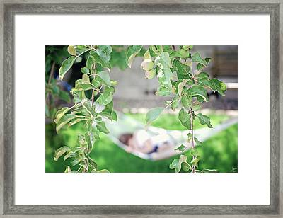 Lazy Days Of Summer Framed Print by Lisa Knechtel