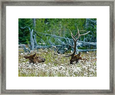 Framed Print featuring the photograph Lazy Days by Wesley Aston