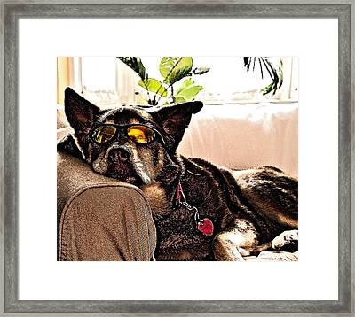 Lazy Dog Framed Print by Jim DeLillo