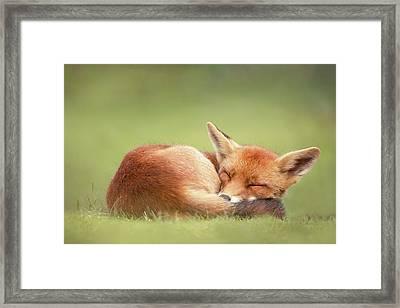 Lazy Fox Series- Lazy Fox Is Lazy Framed Print