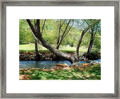 Lazy Tree Framed Print by Glenda Barrett