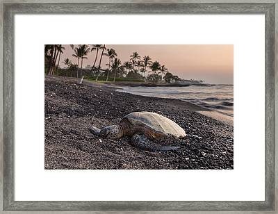 Lazy Turtle Framed Print by Thorsten Scheuermann