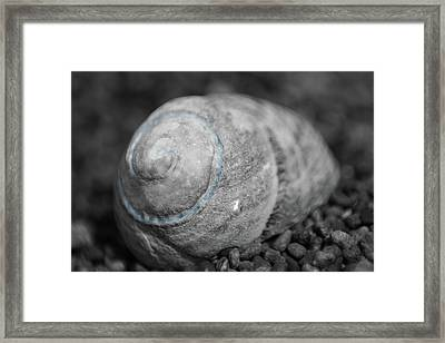 Lc Fibonacci Framed Print