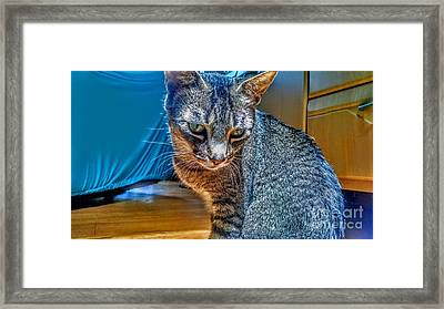 Le Chat Bleu Framed Print