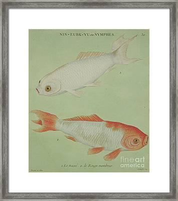 Le Nacre, Le Rougi Membres Framed Print