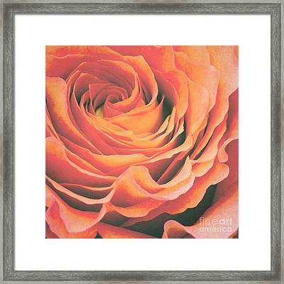 Le Petale De Rose Framed Print by Angela Doelling AD DESIGN Photo and PhotoArt