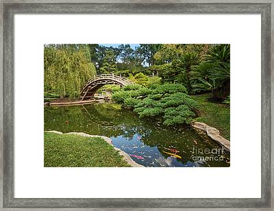 Lead The Way - The Beautiful Japanese Gardens At The Huntington Library With Koi Swimming. Framed Print
