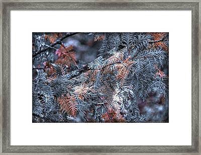 Framed Print featuring the photograph Ceader by Michaela Preston
