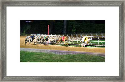 Leader Of The Pack Framed Print by Keith Armstrong