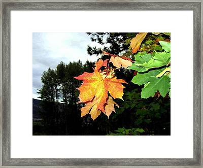 Leading The Way Into Fall Framed Print