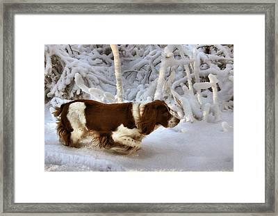 Leading The Way Framed Print by Kristin Elmquist