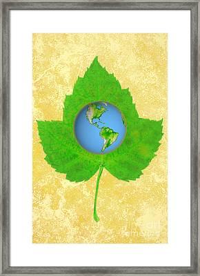 Leaf & Earth Framed Print by George Mattei