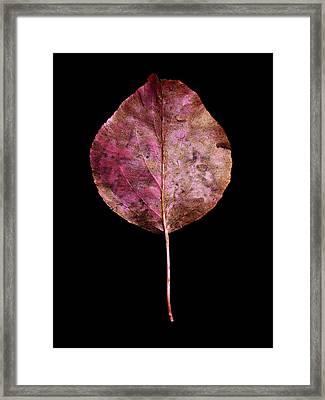 Leaf 20 Framed Print