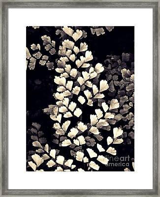 Leaf Abstract 15 Sepia Framed Print by Sarah Loft