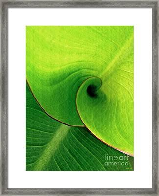 Leaf Abstract 16  Framed Print by Sarah Loft