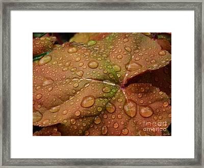 Leaf Abstract 17  Framed Print by Sarah Loft