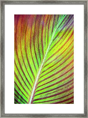 Leaf Abstract Framed Print by Christina Rollo