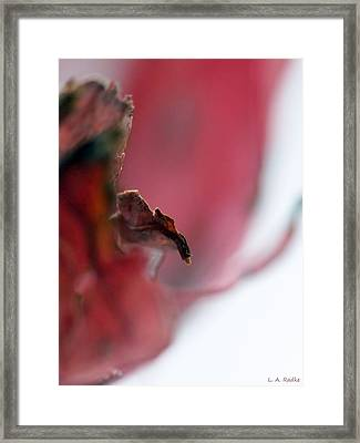Leaf Abstract II Framed Print