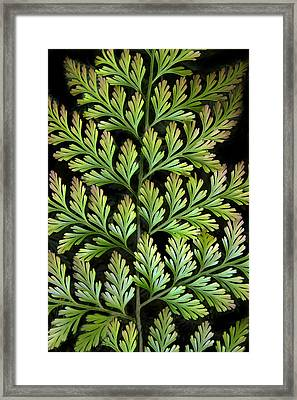 Leaf Abstract Framed Print by Jessica Jenney