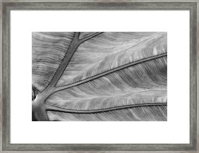 Leaf Abstraction Framed Print