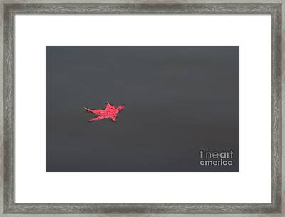 Leaf Alone Framed Print