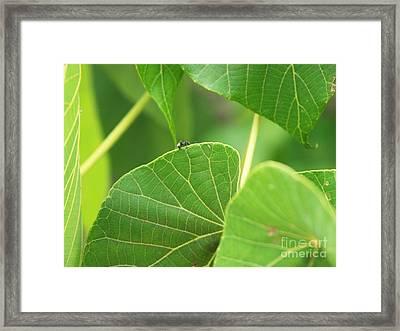 Leaf And Ant Framed Print