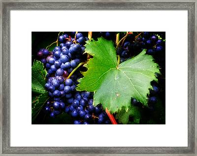 Leaf And Grapes Framed Print by Greg Mimbs