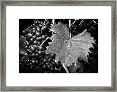 Leaf And Grapes In Black And White Framed Print by Greg Mimbs