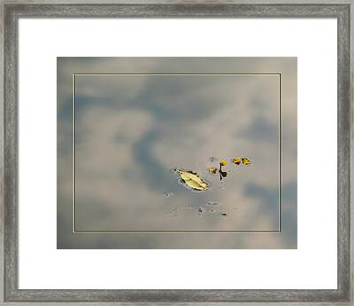 Leaf And  Reflection Framed Print by Robert Clayton