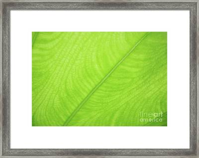 Leaf Art - Green Abstract  Framed Print by Prar Kulasekara