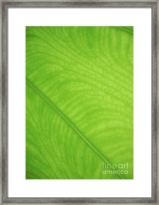 Leaf Art - Natural Abstract  Framed Print by Prar Kulasekara