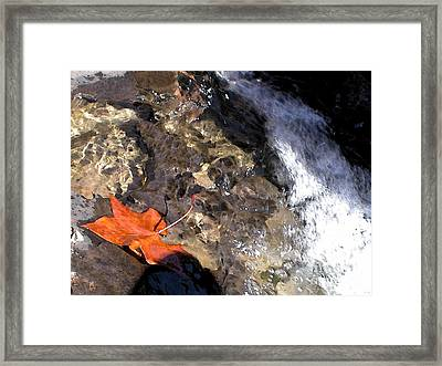 Leaf At Richland Creek Framed Print by Steve Grisham