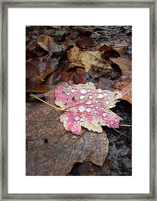 Framed Print featuring the photograph Leaf Bling by Kendall McKernon