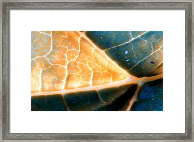 Leaf Blue And Gold Framed Print